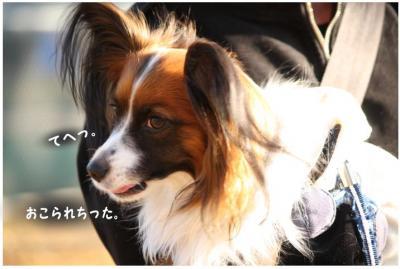 コピー (4) ~ 紅葉2