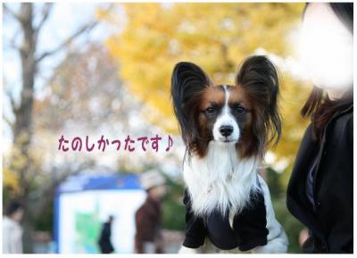 コピー (8) ~ 紅葉3