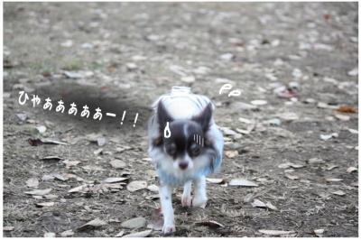 コピー (6) ~ 紅葉3