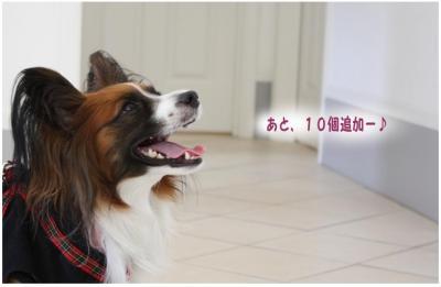 コピー (14) ~ 一周年