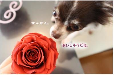 コピー ~ ohana