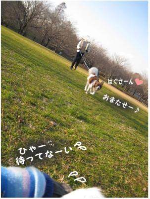 コピー (4) ~ 散歩収め