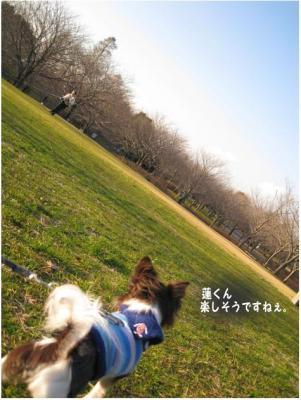 コピー (6) ~ 散歩収め