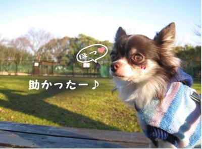 コピー (3) ~ 散歩収め