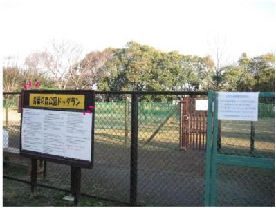 コピー (2) ~ 散歩収め