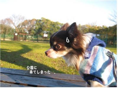 コピー ~ 散歩収め