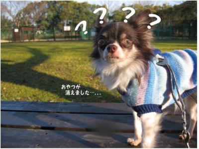 コピー (7) ~ 散歩収め