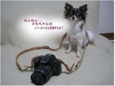 コピー (6) ~ ストラップ