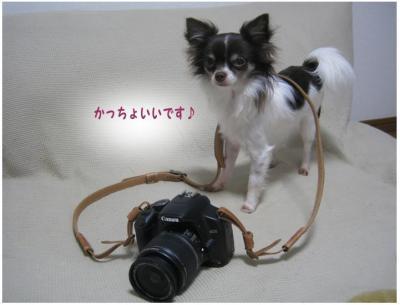 コピー (4) ~ ストラップ