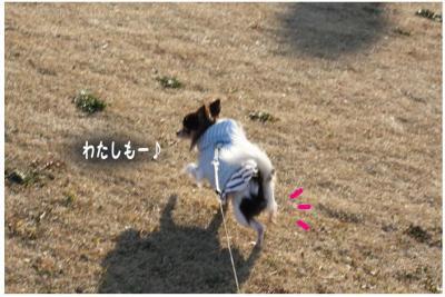 コピー (6) ~ 中央さんぽ