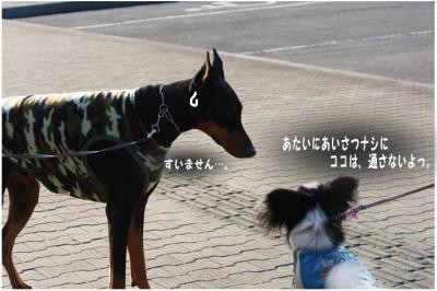 コピー (3) ~ 中央さんぽ