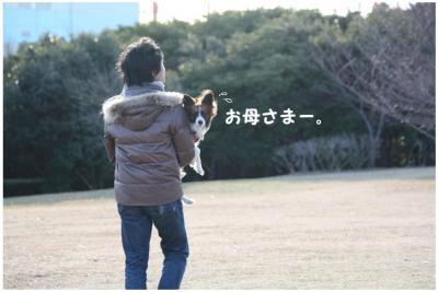 コピー (9) ~ 中央さんぽ