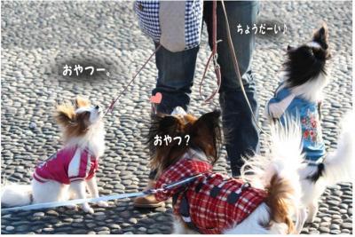 コピー (7) ~ 中央さんぽ