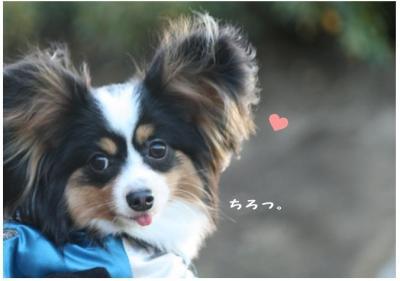 コピー (15) ~ 中央さんぽ