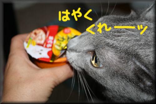 IMG_4270-2.jpg