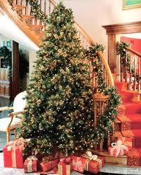 クリスマスツリー sodahead