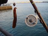 釣り 海釣り ロマン