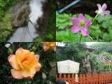 ウォーキング 江ノ島 鎌倉 探索