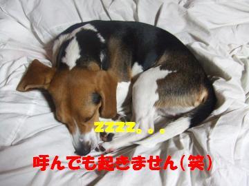 アルフ爆睡1