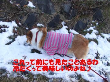 チョコ雪1