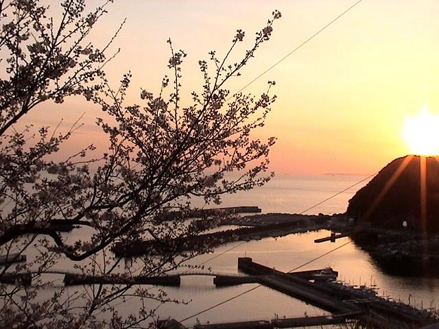 2011sakura5.jpg
