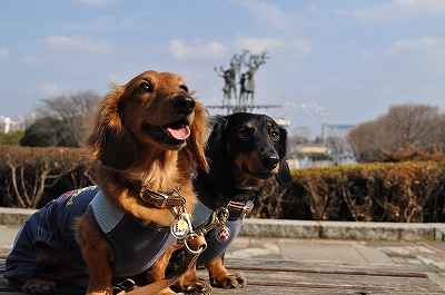 ドッグラン☆昭和記念公園