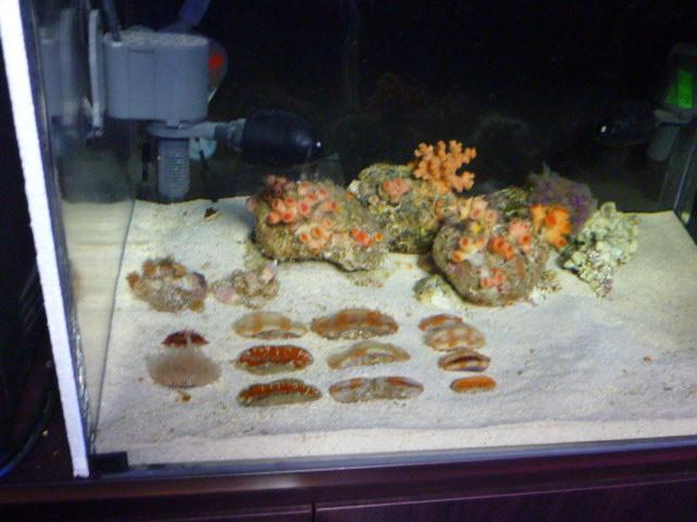 深海サンゴ!