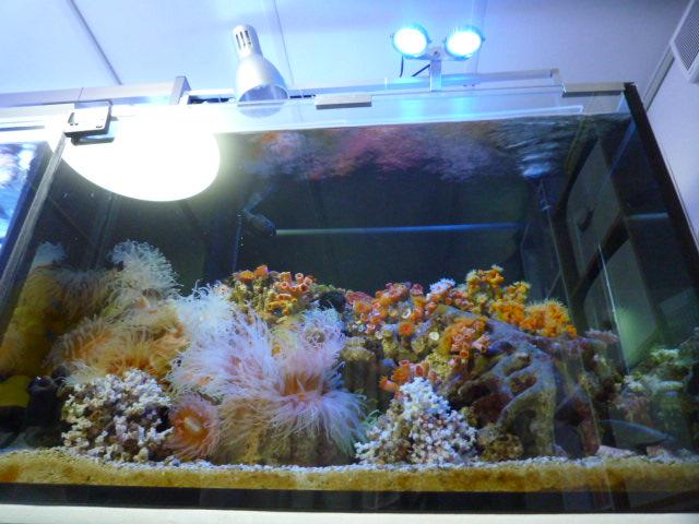 すんごく 大きくなった サンゴたち。。