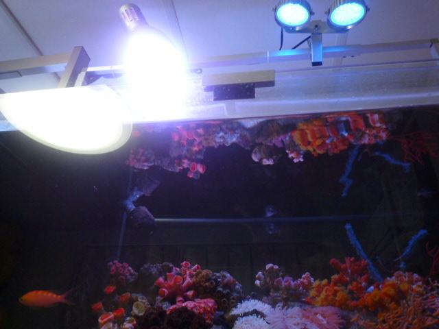 陰日水槽照明