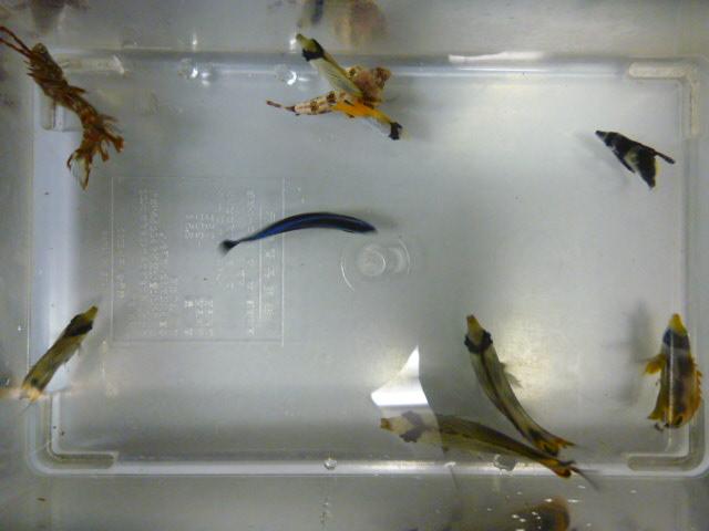 採集できた 魚たち♪