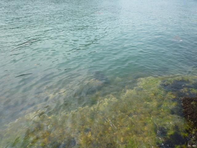 透き通る海!