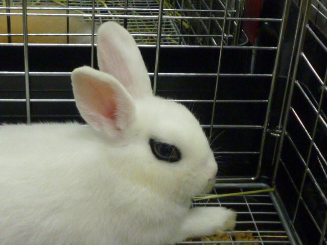 アイメイクが素敵な ウサギ。