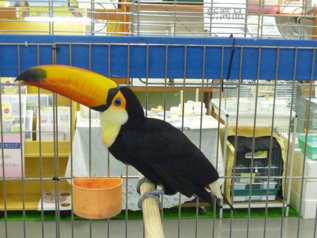 旦那の 好きな鳥♪