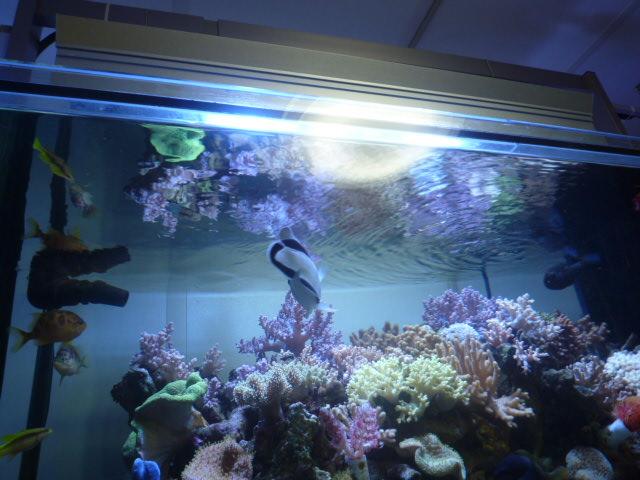 トサカ水槽の照明