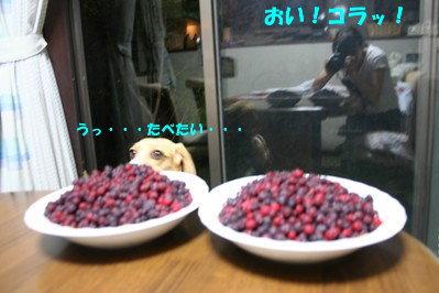 2 IMG_3515