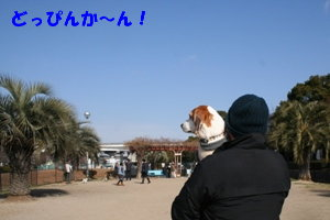 4 IMG_7964