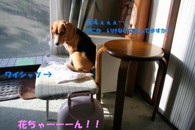 15 IMG_7609