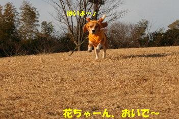 12 IMG_8221