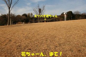 11 IMG_8225