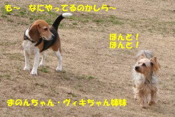17 IMG_8353