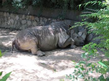 王子動物園22.jpg
