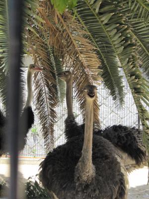王子動物園26.jpg