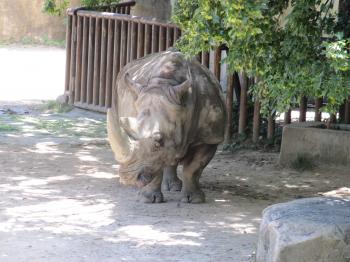 王子動物園32.jpg