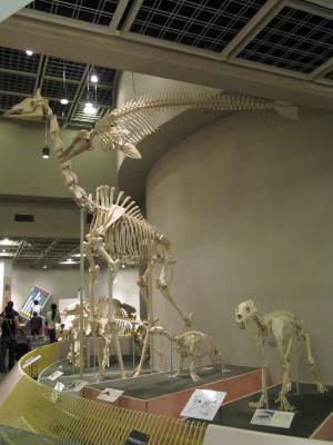 王子動物園37.jpg