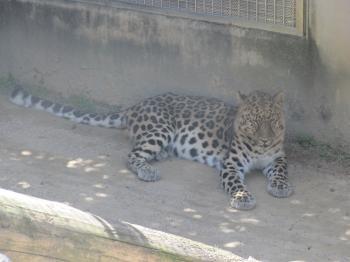 王子動物園46.jpg