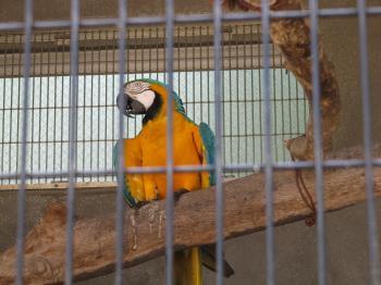 王子動物園43.jpg