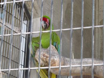 王子動物園44.jpg