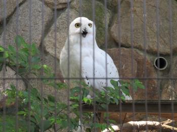 王子動物園53.jpg