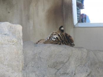 王子動物園48.jpg