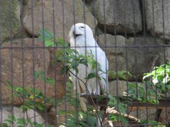 王子動物園55.jpg